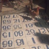 Chicken Bingo