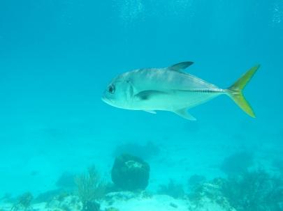 Snorkel Shot