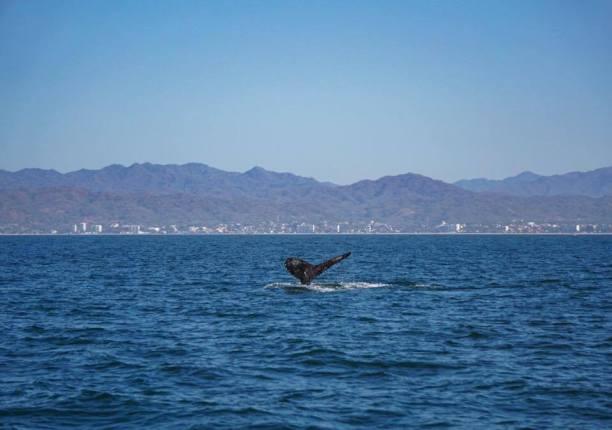 whalewatching4